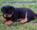 Balou 8 Wochen alt