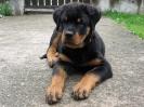 Duke-4-Monate-alt