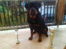 Duke 16 Monate alt..10