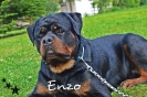 Enzo 14 Monate alt.