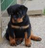 Enzo 8 Wochen alt. 4